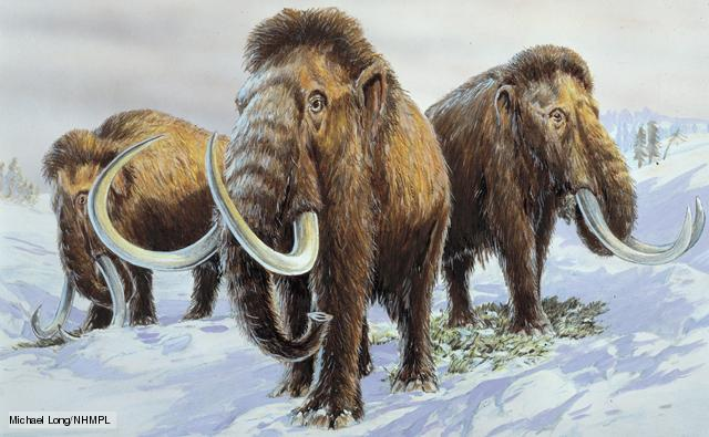 Cloned woolly mammoth